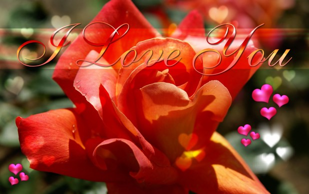 L Love You Wallpaper 1