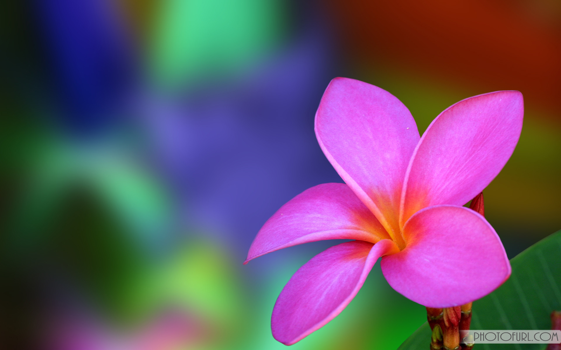 Beautiful Flower Wallpapers Desktop Full Screen