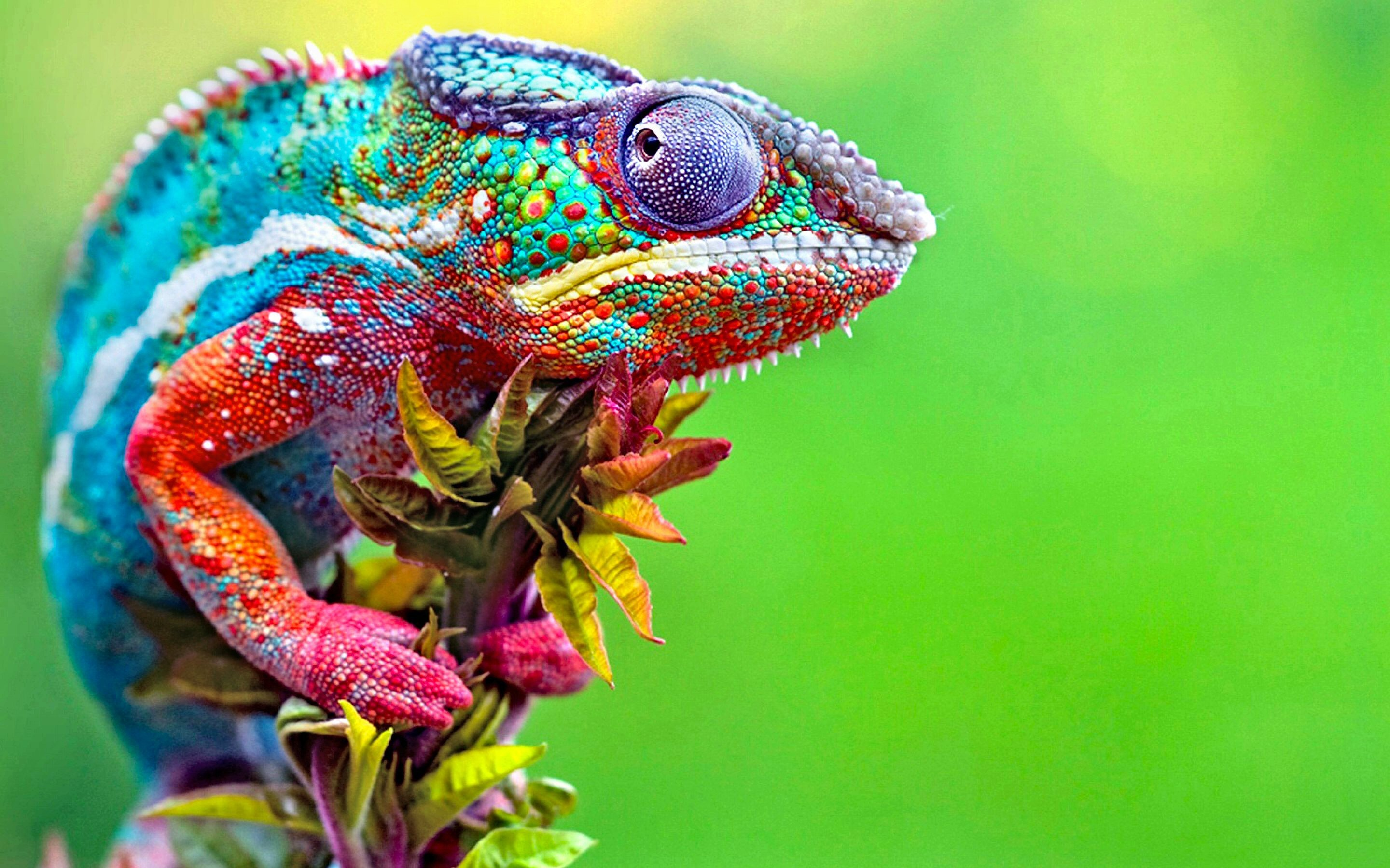 Animal wallpaper            Download free awesome High Resolution     animal wallpaper 1920x1080 for xiaomi
