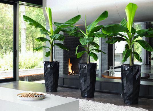 plants u can grow in winter