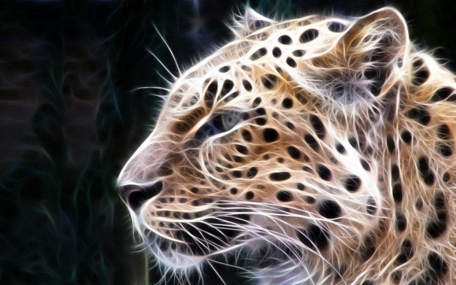 Leopard Pride Animal 3D Wallpaper HD Wallpapers