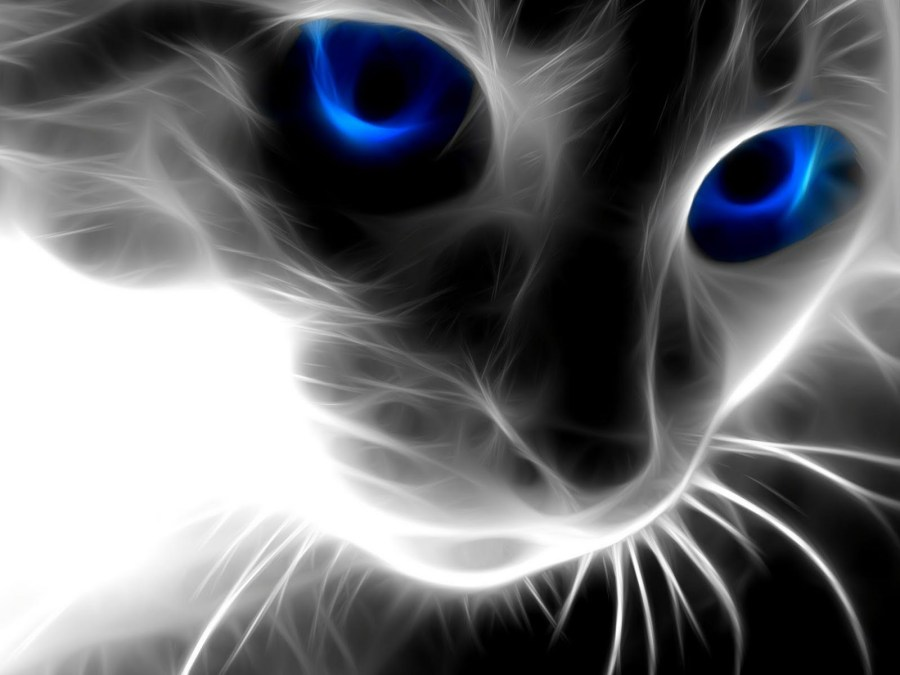 Animals Blue And Black Eyes Cat Top Best HD Wallpaper