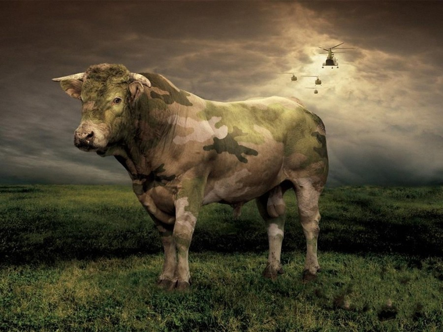 Cow Animal Abstract Digital Art Creative Picture Image