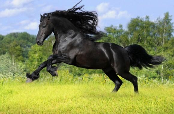 Beautiful Black Horse Run Photos HD Wallpapers Gallery
