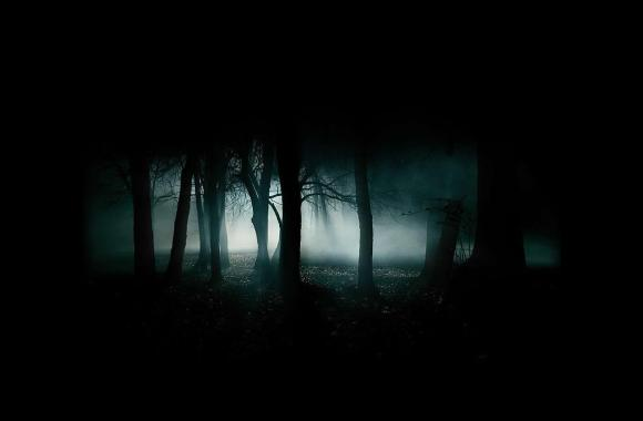 Free Download Picture Wallpapers Dark Abstract HD Forest