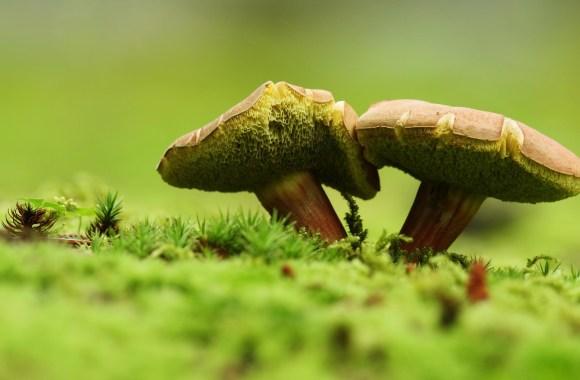 Mushrooms Macro Photography Wallpaper HD Widescreen Desktop