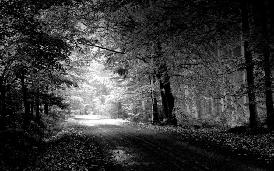 Black In White Nature HD Wallpapers For Your Desktop Free Download