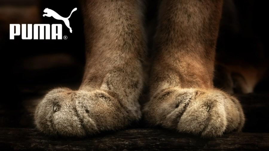 Best HD Wallpaper Picture Of Puma Sport Brand Free Download