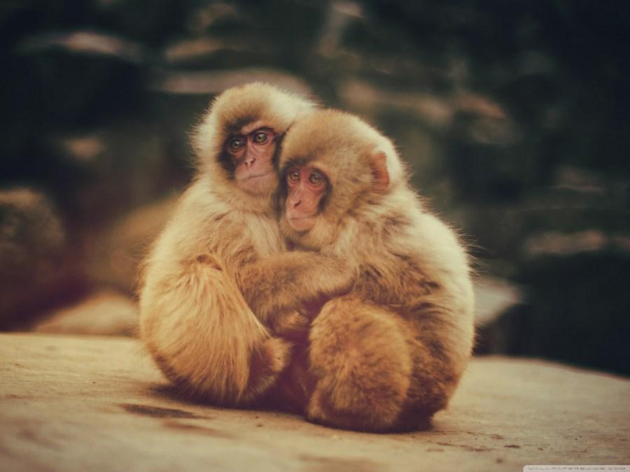 baby-monkeys-wallpaper