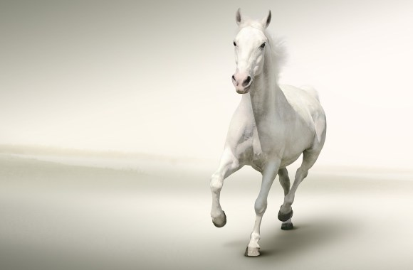 White Horse Running White Background HD Wallpaper