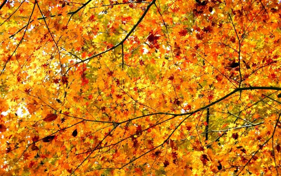 autumn-leaves-hd-wallpaper