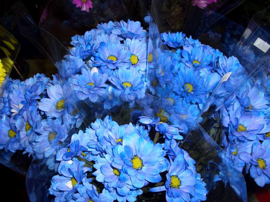 Blue and yellow flowers-1920