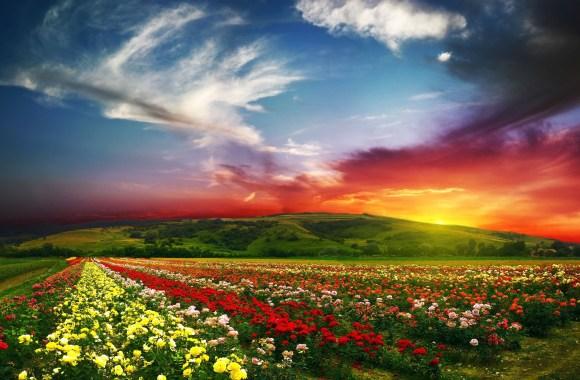 Flower Landscape with Sunset HD Wallpaper