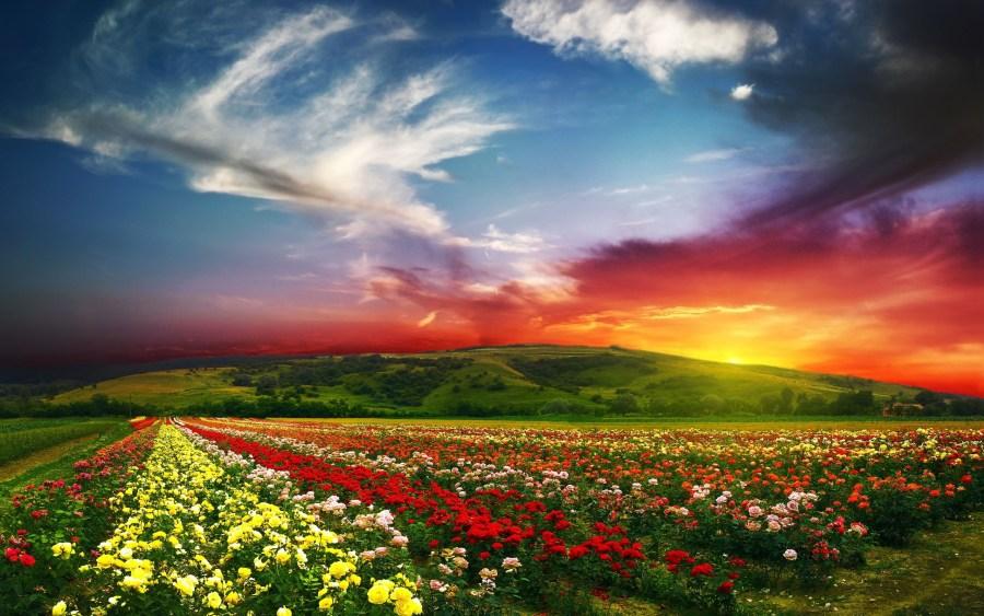Flower landscape with Sunset