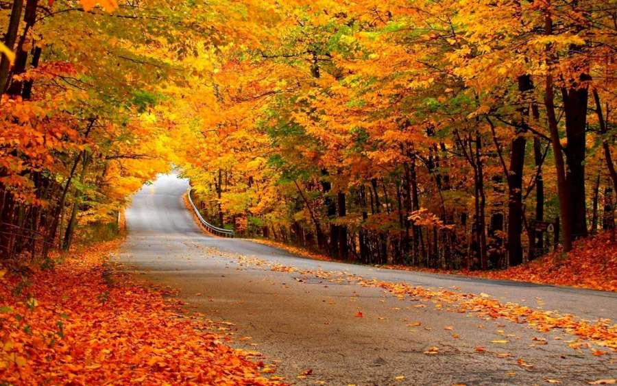 Coloful Autumn Roadway-1920