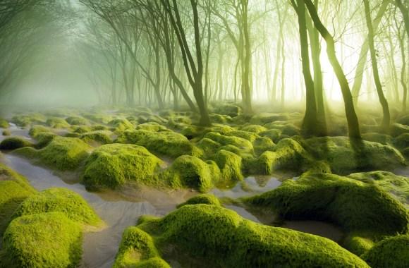 Romania Moss Swamp HD Wallpaper