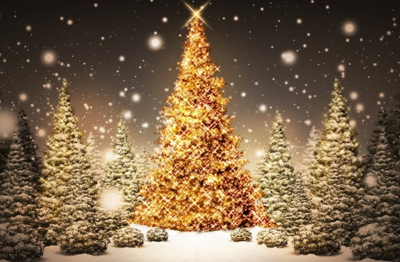 Christmas Trees HD Wallpaper