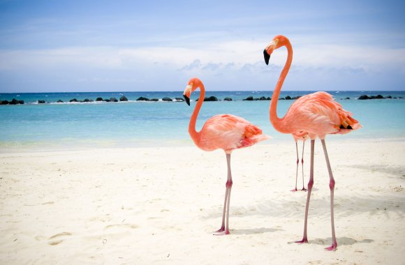 Flamingos on the Beach HD Wallpaper