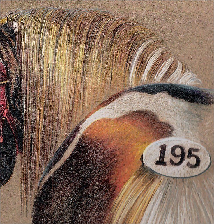 New How To Draw Realistic Hair In Colored Pencil Ideas With Pictures