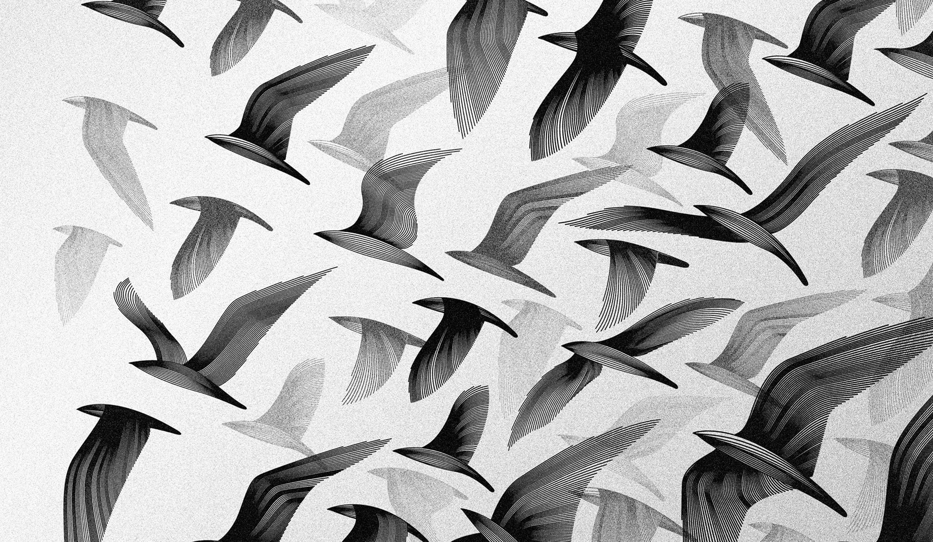 Black Abstract White And Birds