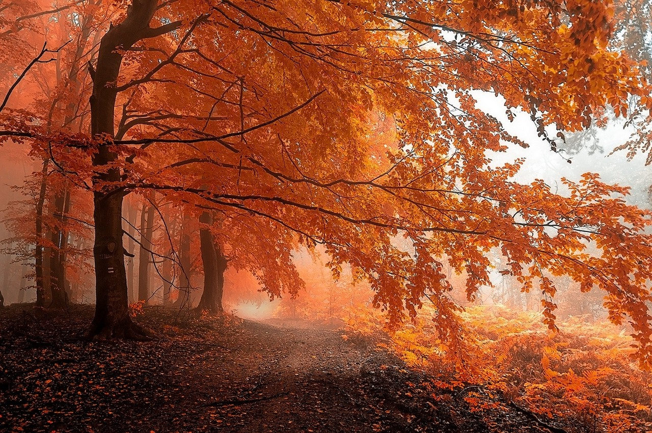 Fall Animal Backgrounds Desktop