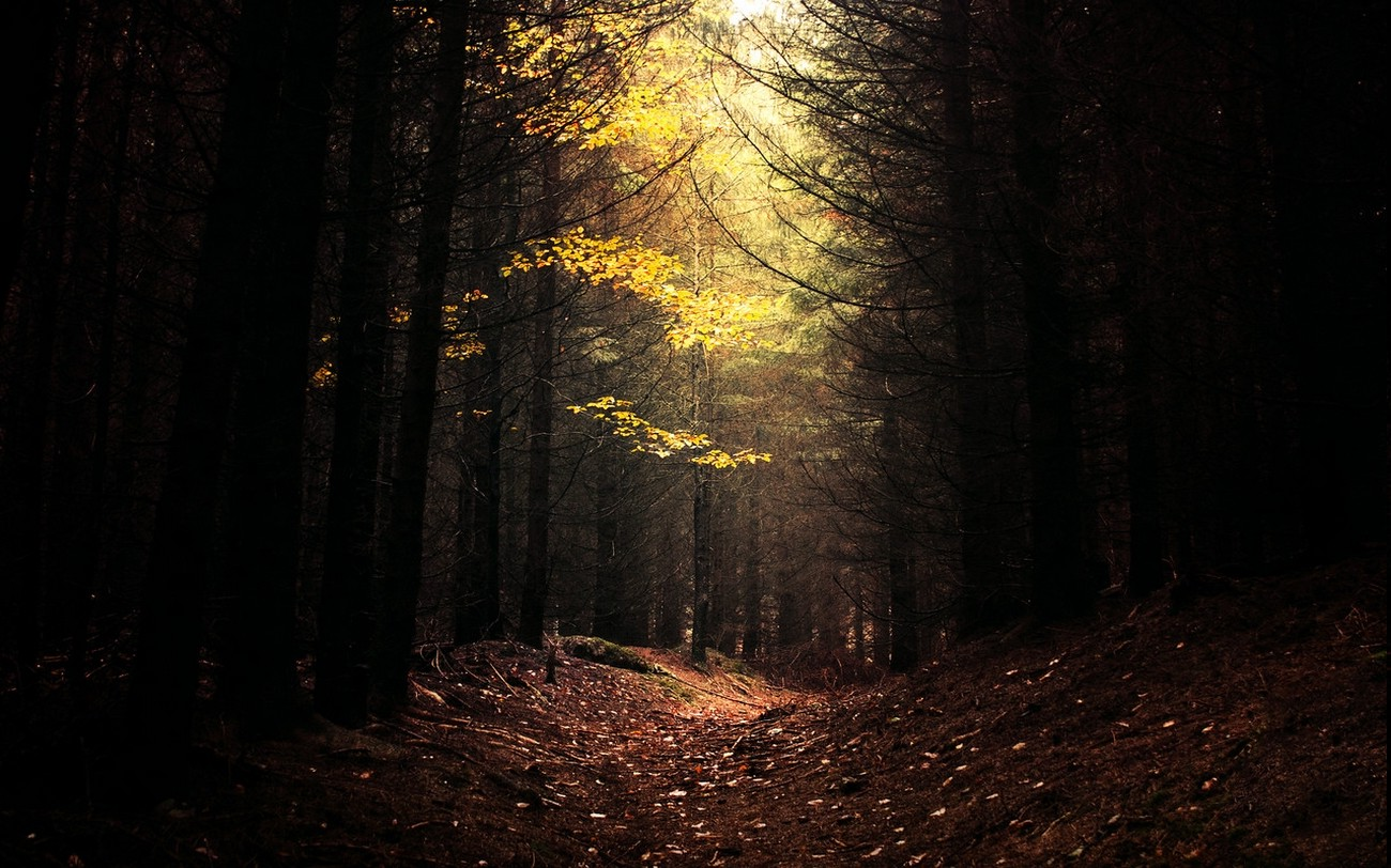 Nature Landscape Dark Forest Daylight Path Trees