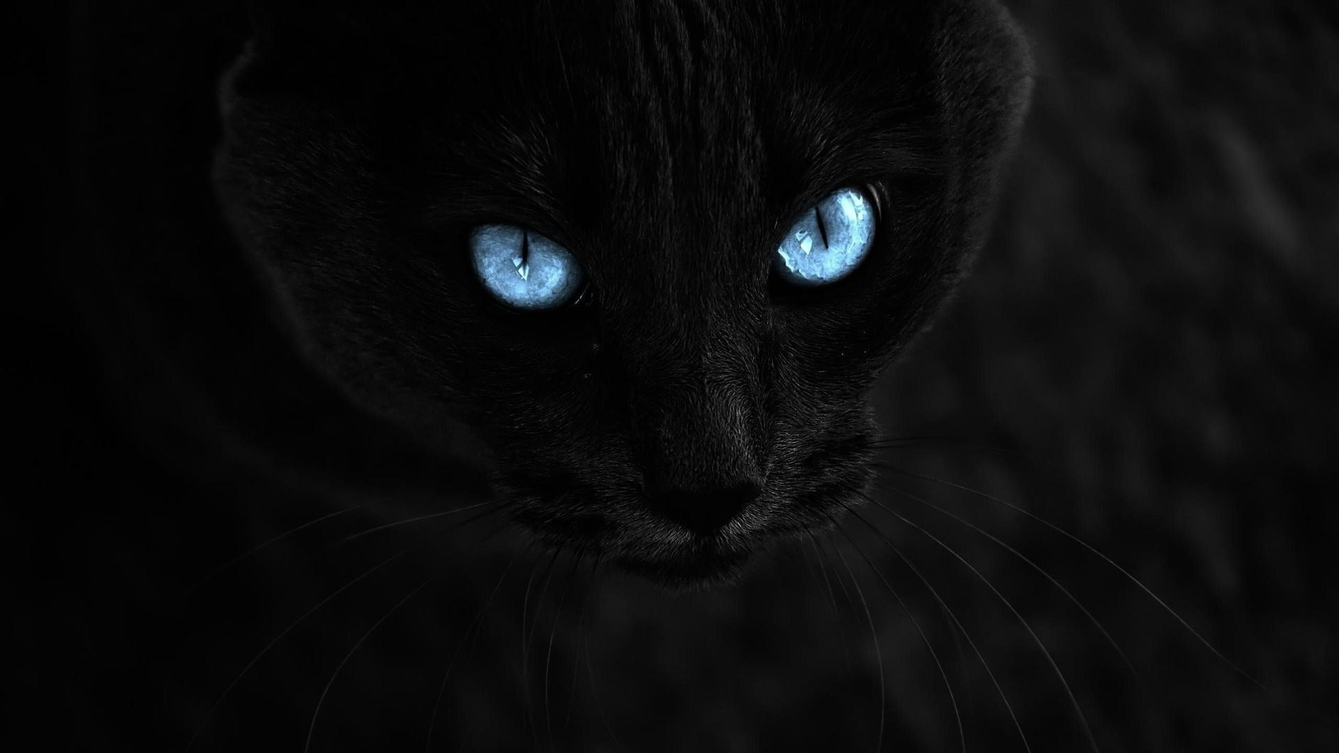 cat, selective coloring, animals, blue eyes, black cats wallpapers