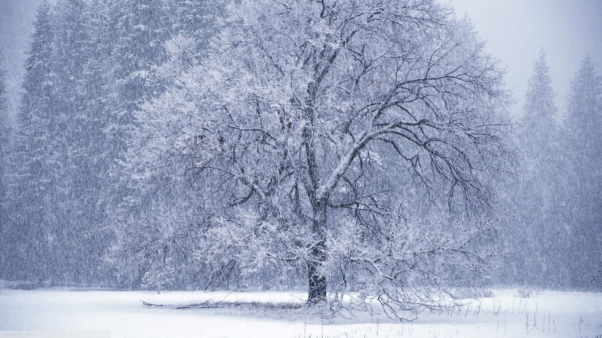 Trees Winter Nature Landscape Snow White Wallpapers
