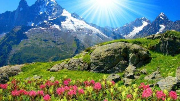 flowers  Mountain Wallpapers HD   Desktop and Mobile Backgrounds flowers  Mountain HD Wallpaper Desktop Background
