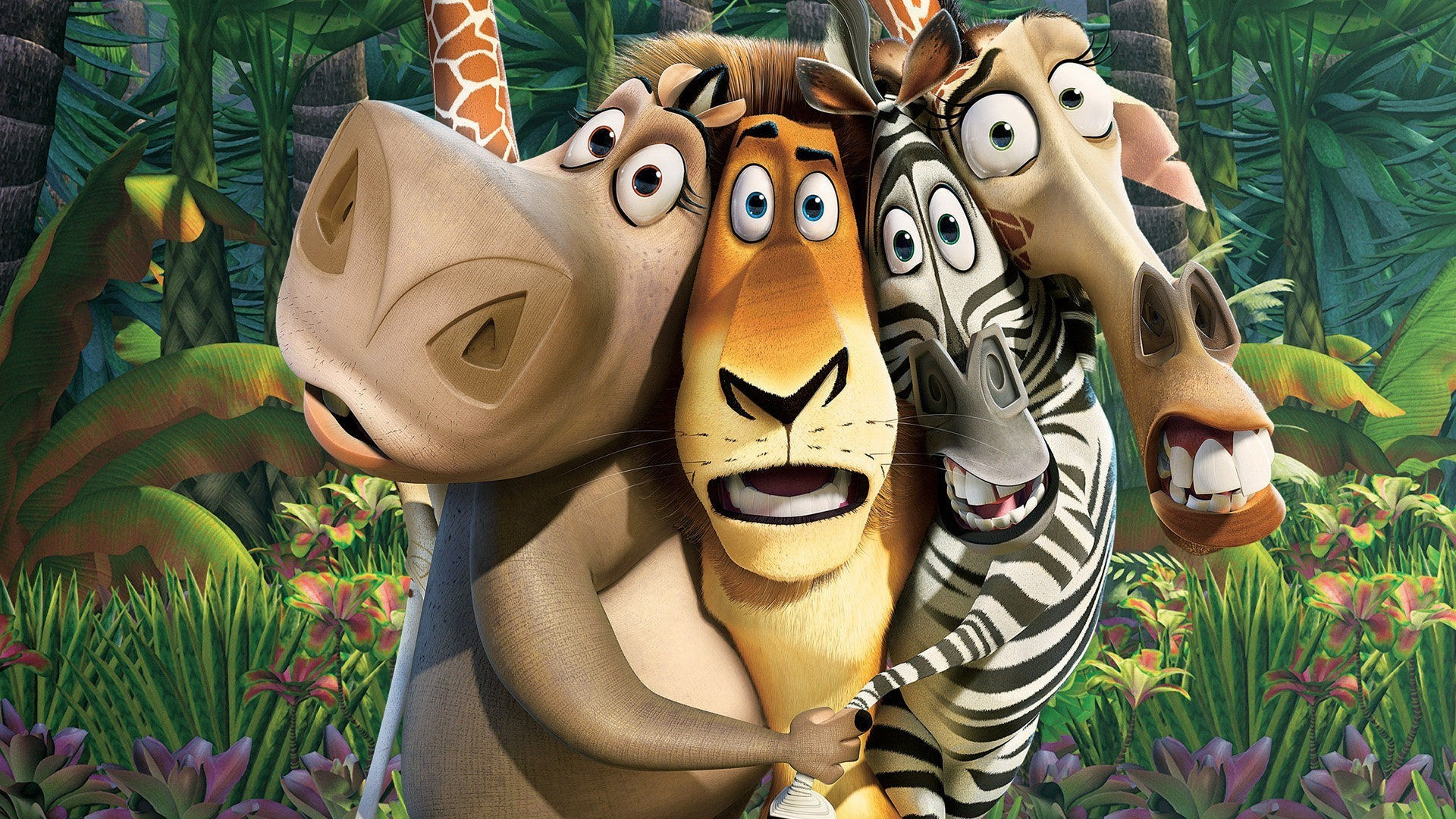 movies, madagascar (movie) wallpapers hd / desktop and mobile