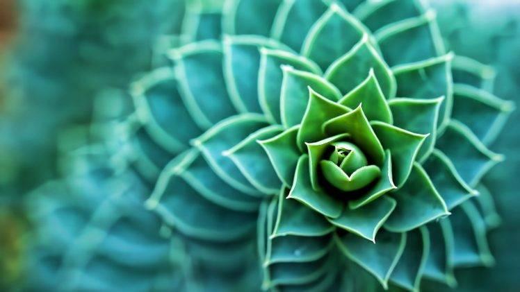 Hd Succulent Wallpaper 3