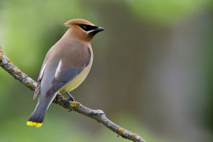 Birds Bird Wallpapers Hd Desktop And Mobile Backgrounds