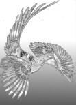 pheasant-3axxx-w900-h900