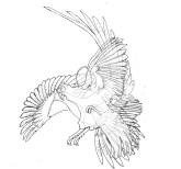 pheasant-fighting-overlay-1-3bxx-w900-h900