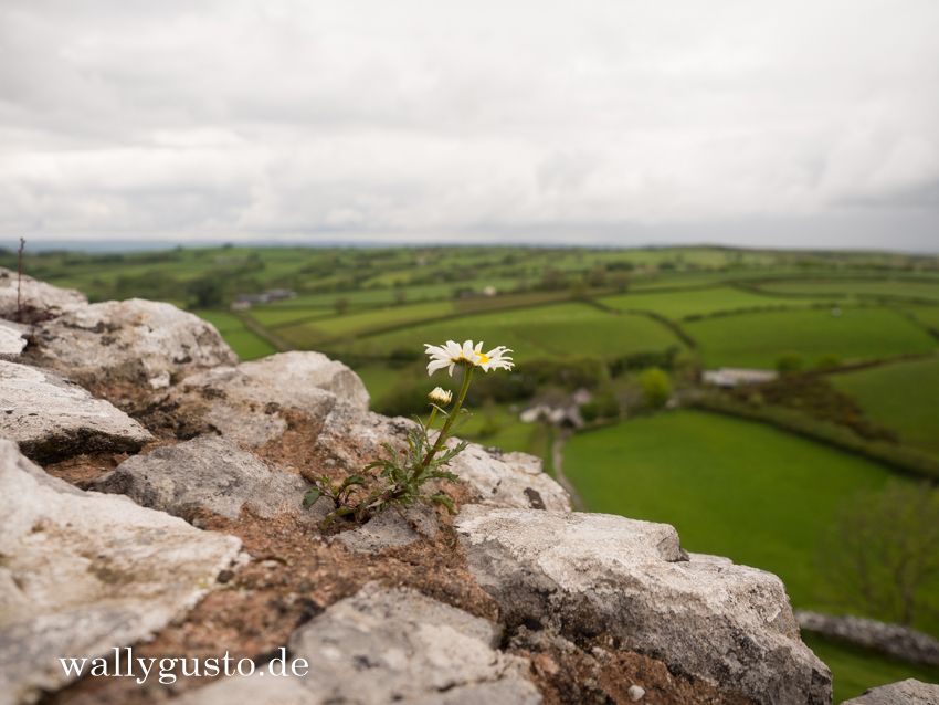 Carreg Cennen Castle- Travel Guide | Pembrokeshire Coast Nationalpark