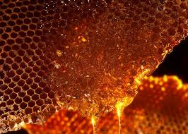 honey-comb-dripping-honey