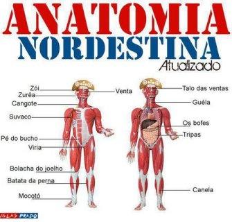 nordeste-anatomia