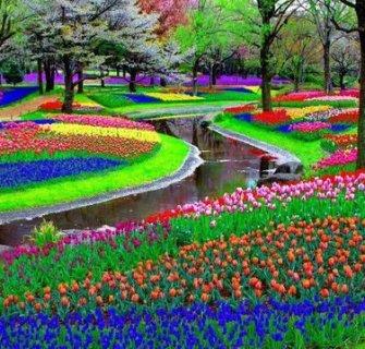 flores-holanda