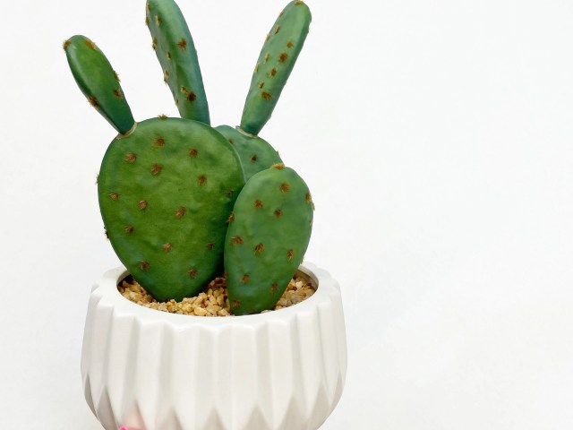 Better Homes & Gardens White Ceramic Pot with Faux Cactus