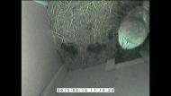 Barn Owl in Box (01-04-2014 13-19)