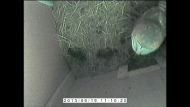 Barn Owl in Box (01-04-2014 13-19)