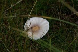 018 Fungus_edited-2