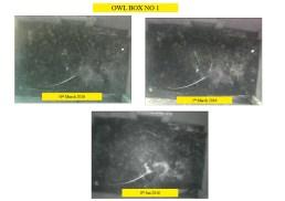 Owl box No 1