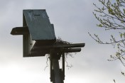IMG_1612 Start of nest on Owl box platform