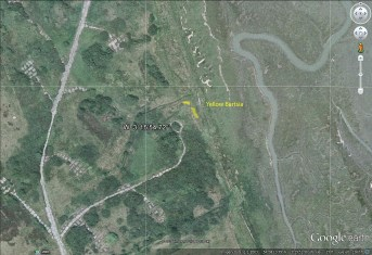 Area of Yellow Bartsia