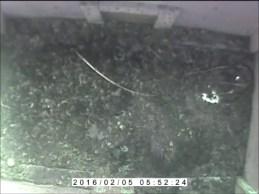 Snapshot Owl Box No1 (05-Jul-16 2-45 PM)