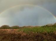 P1020117 Rainbow middle - Copy