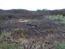 P1020131 Apple tree cut down Feb 2017 - Copy