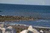 IMG_4269 Flock of Waders settling on spit - Copy
