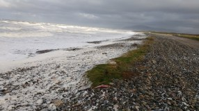 Sea foam Earnsy Bay 1 - Copy